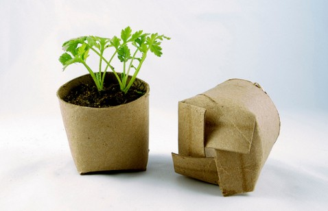 Seedlings-in-a-Toilet-Paper-Tube-478x308